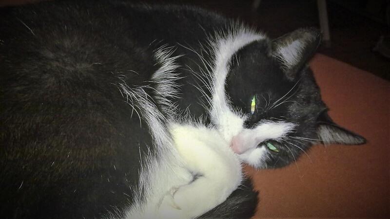 Wie geht es Timer, der Katze von meinem Vater?